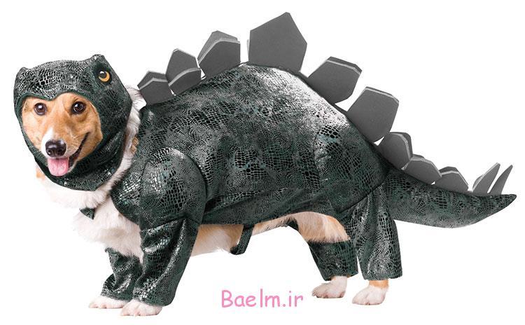 stegosaurus-dog-costume