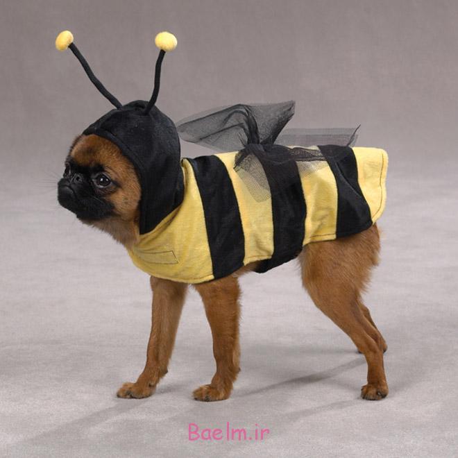 bee-dog-costumes