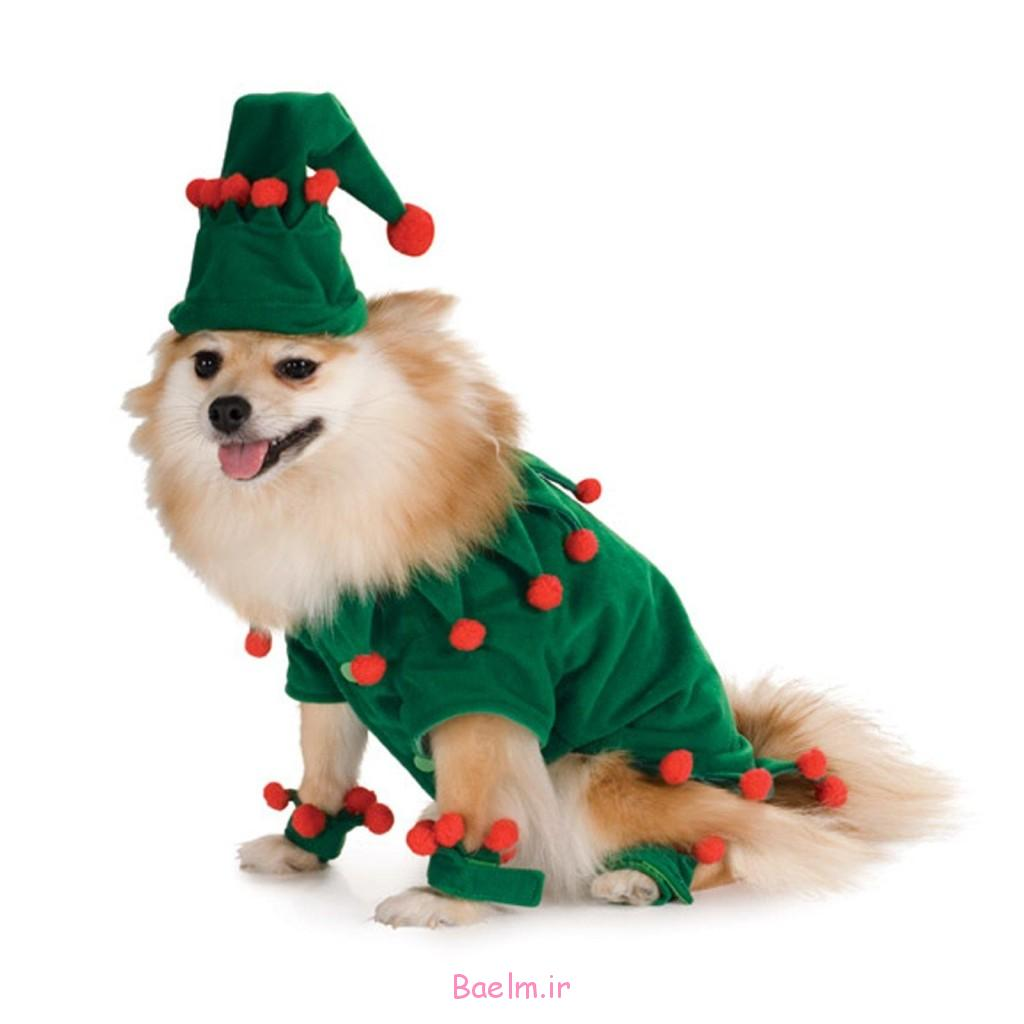 cute-dog-costume-1024x1024