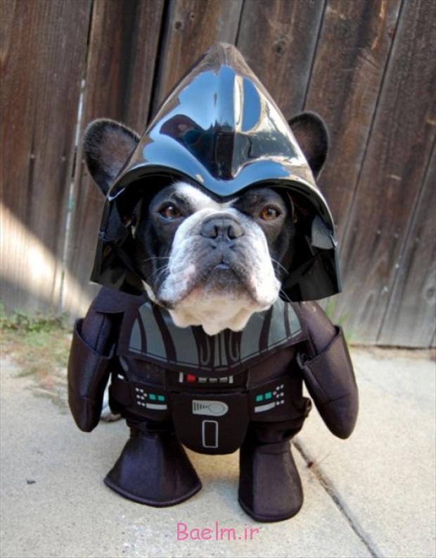darth-vader-dog-costume