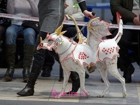 dog-costume-dragon