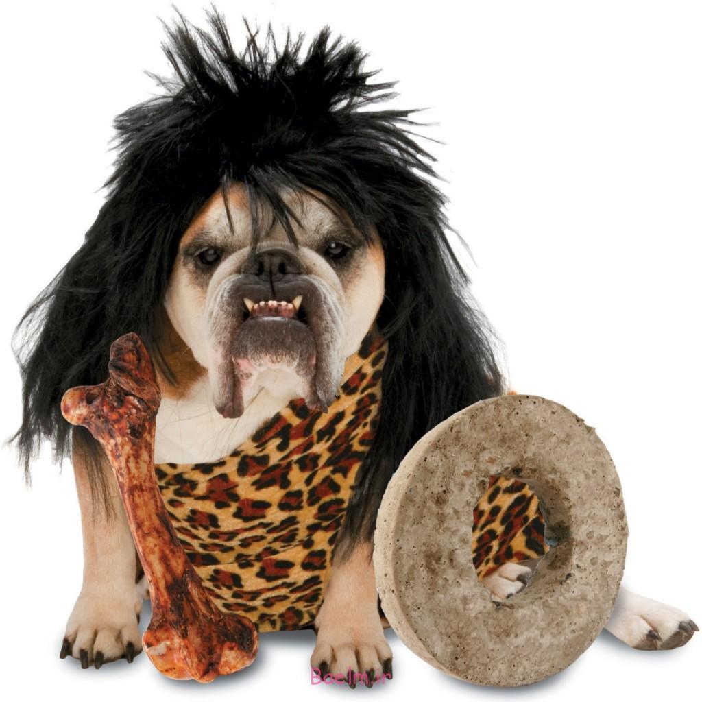 dog-costumes-1024x1024