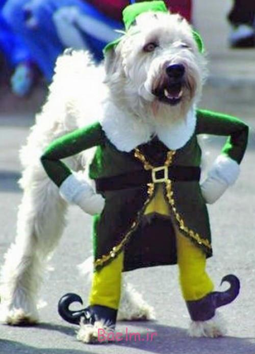 elf-dog-costume