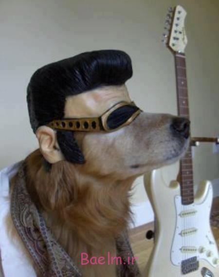 funny-elvis-dog-costume