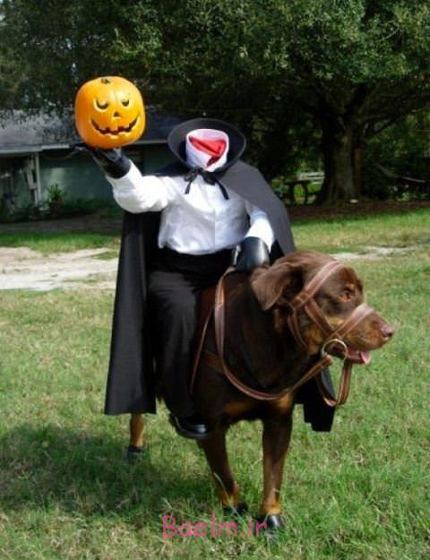 headless-horseman-dog-costume