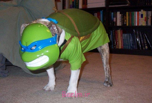 ninja-turtle-dog-costume