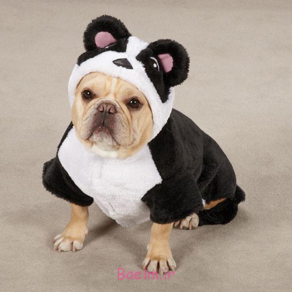 panda-dog-costume