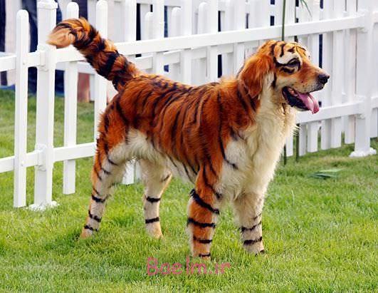tiger-dog-costume