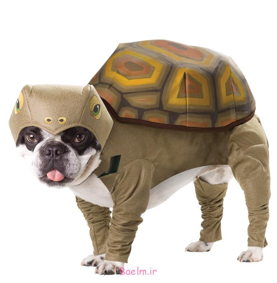 tortoise-pet-costume