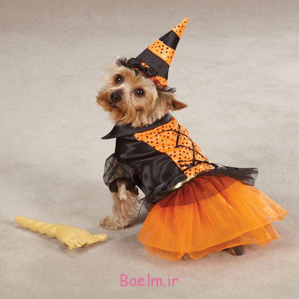 witch-halloween-dog-costume