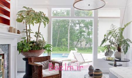 مراقبت از گیاهان آپارتمانی,نکاتی برای مراقبت از گیاهان