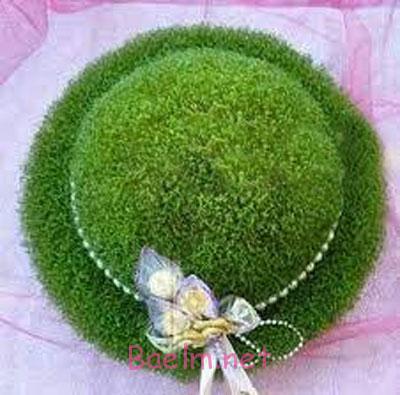 سبزه عید مدل کلاه , سبز کردن سبزه , سبزه عید به شکل کلاه