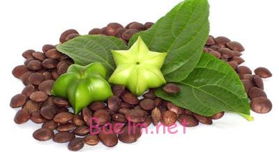 خواص درمانی دانهی «سه چا اینچی»(sacha Inchi)