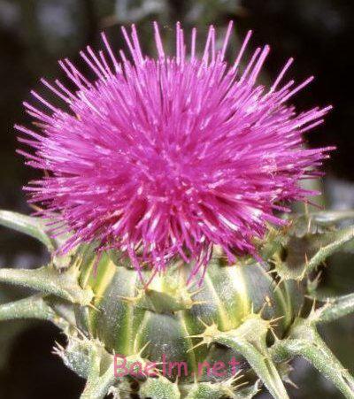 گیاهان مفید برای پوست،سرطان پوست