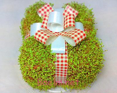 کاشت سبزه به شکل جعبه کادو , کاشت سبزه نوروزی