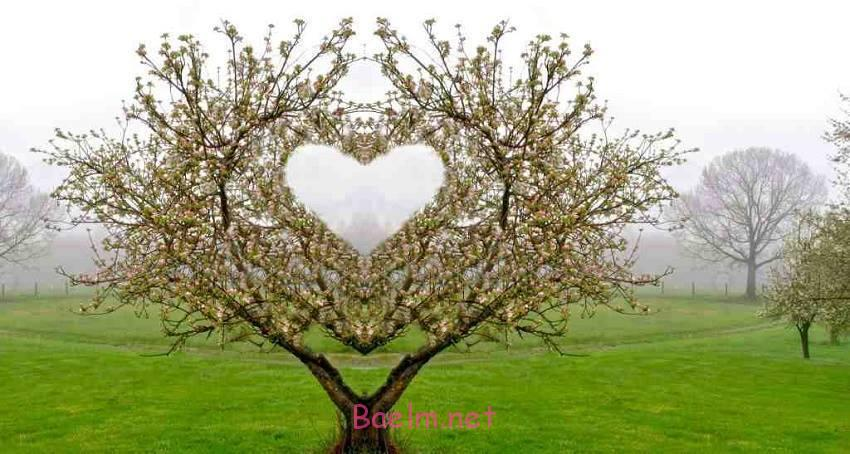 قلب های دیدنی و جذاب در طبیعت | منظره های طبیعی و دیدنی به شکل قلب بسیار زیبا