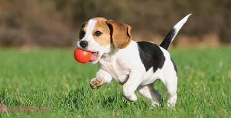 رفتارهای متفاوت سگ ها,تفاوت رفتار سگ های نر و ماده