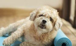 رفتار شناسی سگ - نشانه های دیداری و شنیداری