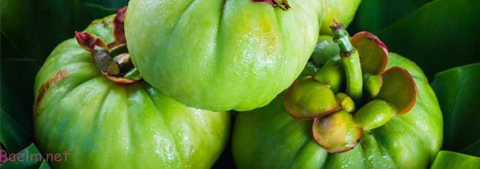 آیا واقعا میوه گارسینیاکامبوجیا میتواند به کاهش وزن سریع و لاعری کمک کند ؟