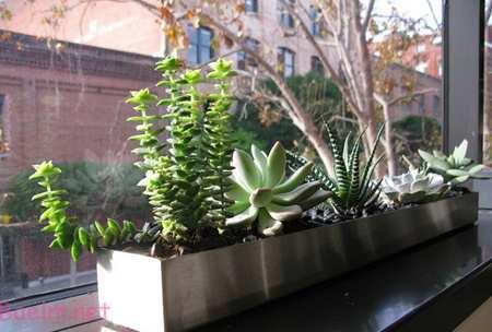 گیاهان خانگی,آشنایی با گیاهان خانگی