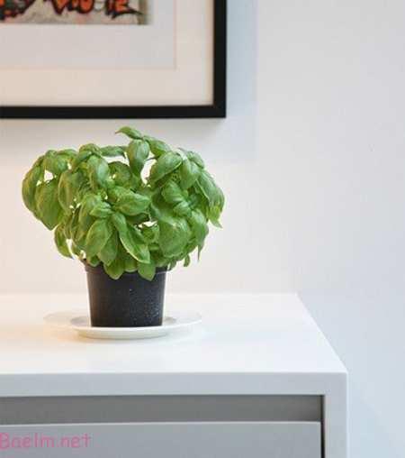 آشنایی با گیاهان خانگی آفتاب دوست, راهنمای نگهداری از گل و گیاه