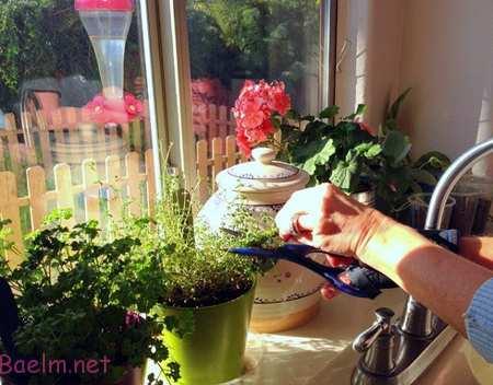 نکاتی برای نگهداری از گیاهان,نگهداری از گل و گیاه