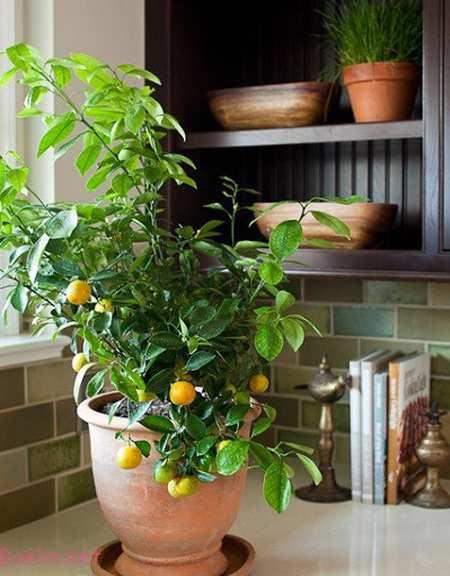 نکاتی برای نگهداری از گیاهان آپارتمانی, معرفی گیاهان آپارتمانی
