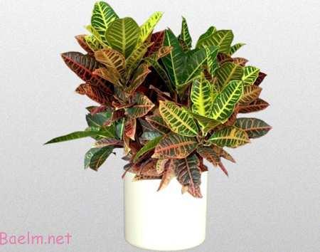 نحوه نگهداری از گیاهان آپارتمانی, آشنایی با گیاهان خانگی آفتاب دوست
