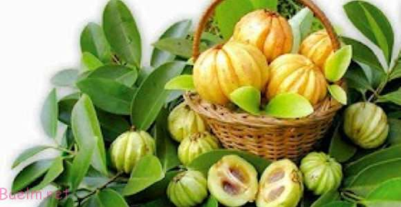 میوه گارسینیاکامبوجیا سطح کلسترول بد خون را کاهش میدهد