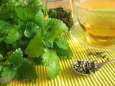 ,خواص داروهای گیاهی,گیاه دارویی