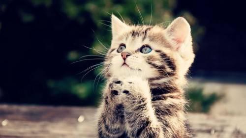 نگهداری از گربه در دوران بارداری خطرناک است