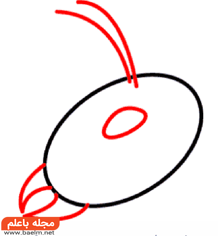 نقاشی مورچه،آموزش کشیدن نقاشی مورچه،مراحل کشیدن نقاشی مورچه2