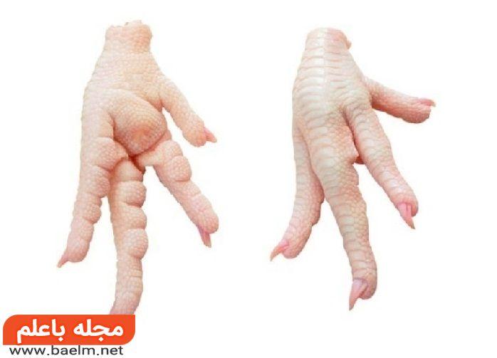 خاصیت شگفت انگیز پای مرغ در از بین بردن چین و چروک صورت