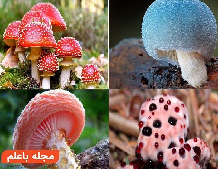آشنایی با انواع قارچهای سمی و خطرناک جهان,علائم سمی بودن قارچ