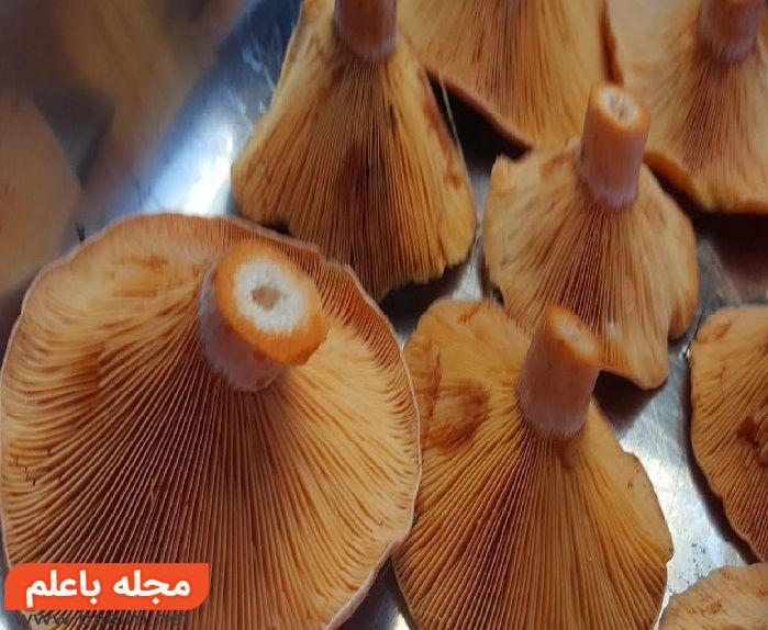 قارچهای میلکَپ (Milk caps),مسمومیت با قارچ های سمی