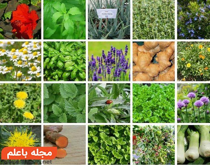 درمان اسهال با گیاهان دارویی,علت و علائم اسهال,داروی گیاهی اسهال