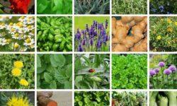 آشنایی با خواص انواع گیاهان دارویی   درمان خانگی انواع بیماری با طب سنتی