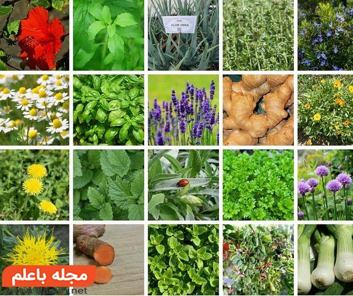 گیاهان دارویی,معرفی گیاهان دارویی,لیست گیاهان دارویی,اهمیت گیاهان دارویی