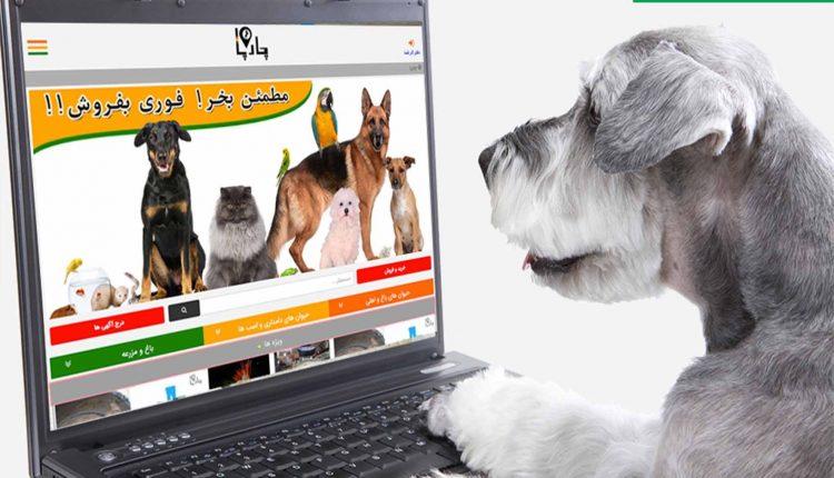 فروش آنلاین حیوانات از انواع حیوانات دامداری