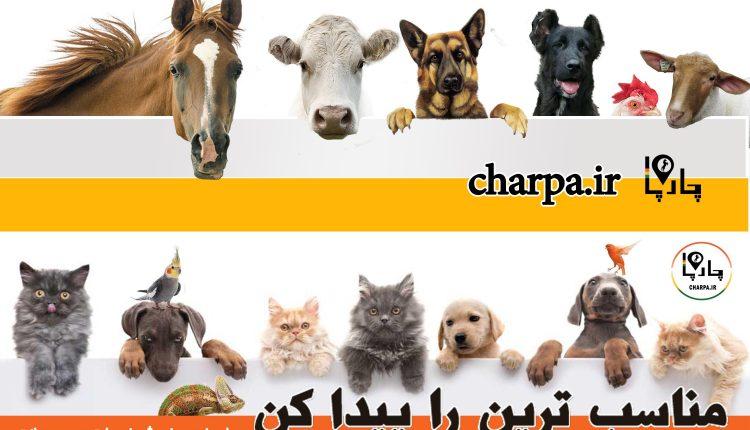 مرکز خرید و فروش سگ ایران