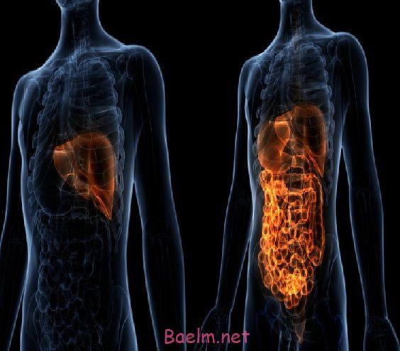 علائم بیماری کبد چیست و راه های پیشگیری و درمان بیماری کبد